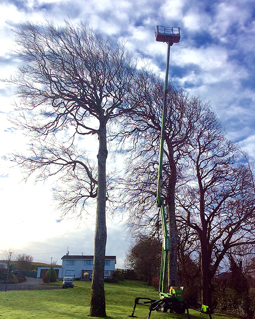 Mayo tree surgery, cherry picker, work platform